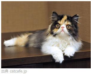 猫カフェ きゃりこ 新宿店 http://catcafe.jp/shop_shinjyuku.html