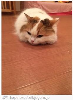 渋谷の猫カフェ ハピ猫 http://hapineko.com/