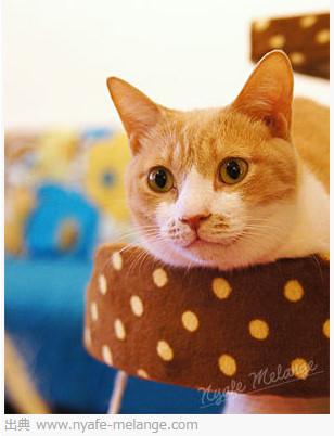 猫カフェ Nyafe Melange http://www.nyafe-melange.com/