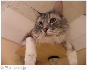 猫カフェ ねこ・JaLaLa http://www.nekojalala.com/