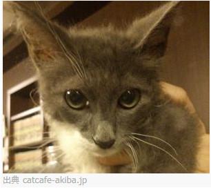 猫カフェ nyanny 秋葉原店 http://catcafe-akiba.jp/