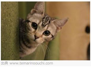 不思議なネコの森「てまりのおうち」 http://www.temarinoouchi.com/