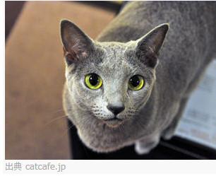 猫カフェ きゃりこ 吉祥寺店 http://catcafe.jp/shop_kichijyouji.html