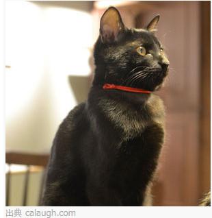 猫カフェきゃらふ http://calaugh.com/