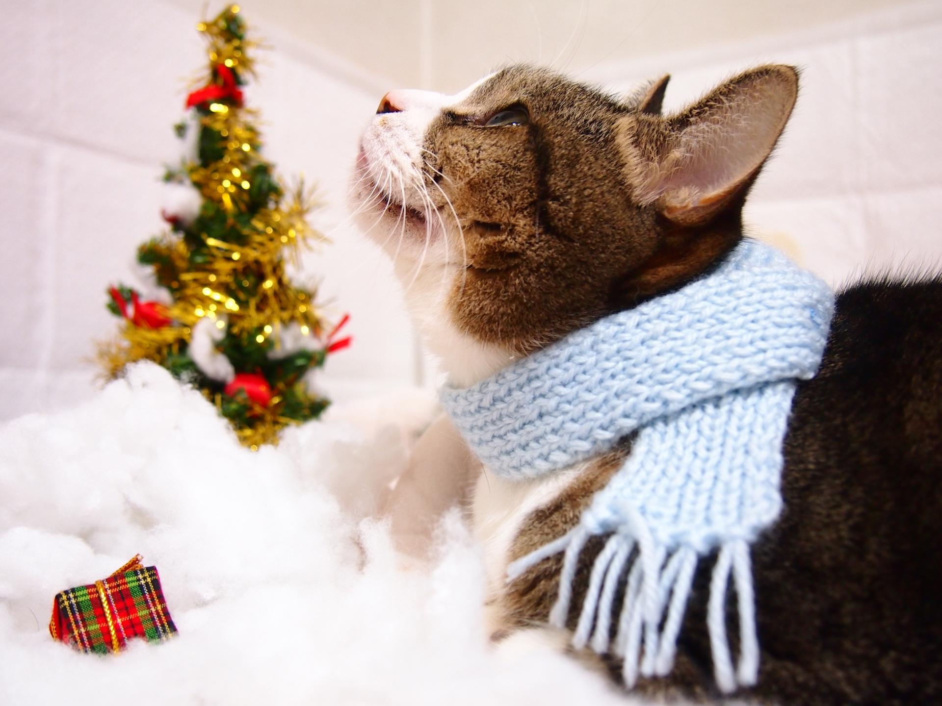 クリスマスプレゼントと猫