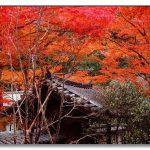 『紅葉の鎌倉は大人が似合う』おすすめお散歩コース2016