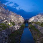 2017『桜の開花予想』九州から北海道まで【全国版】